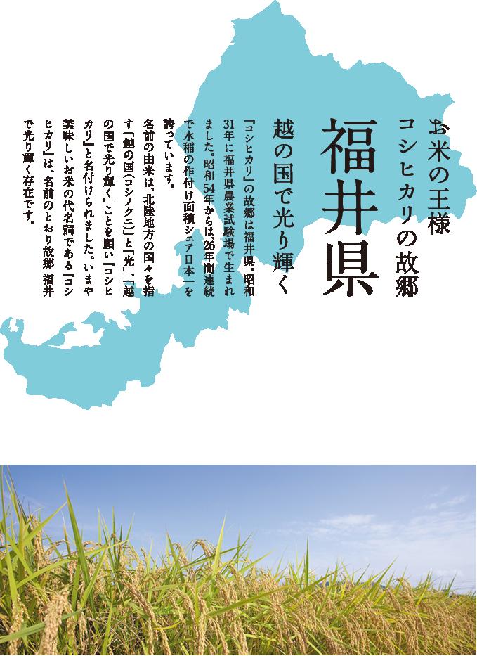 九頭龍米澄水むすびが育つ福井県